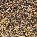 Johnston & Jeff Favourite Canary Seed - 20kg